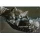 Plaque en métal 20 X 30 cm Chats endormis (Chatons)